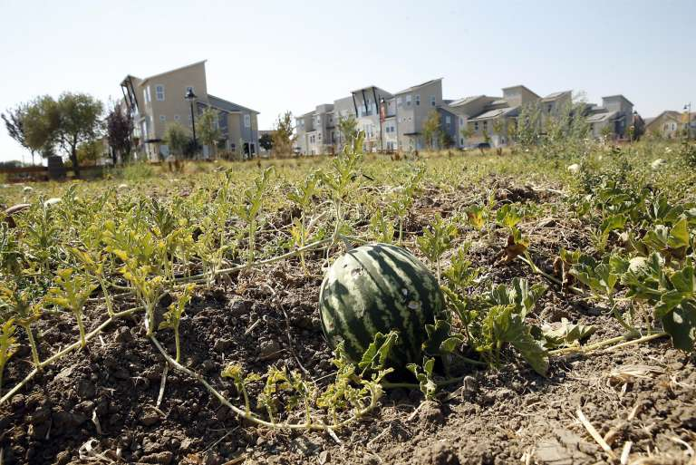 Welcome to the agrihood: Farm-to-tableau living in Davis