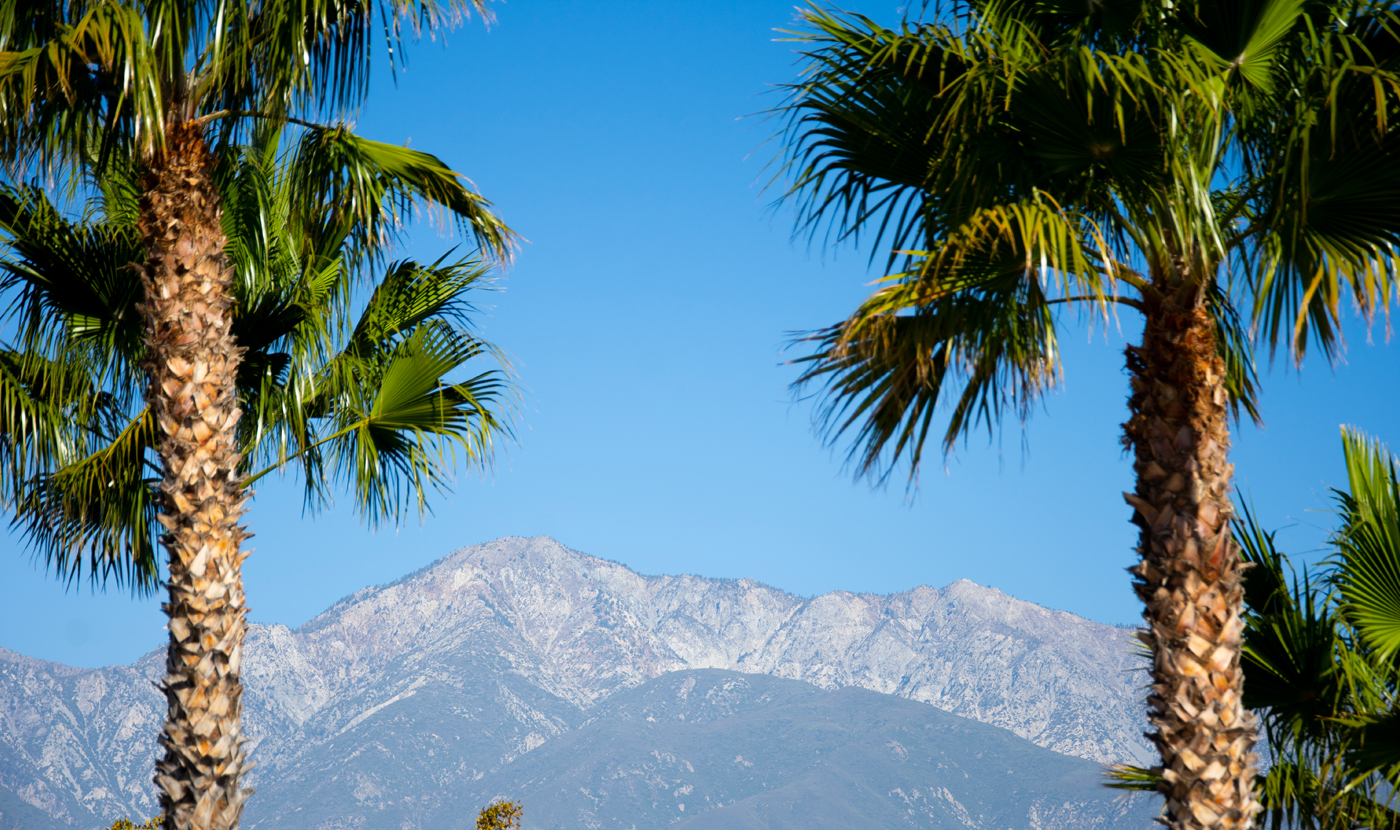 Palm trees & mountains